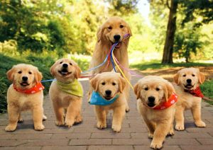 mom dogs with puppies
